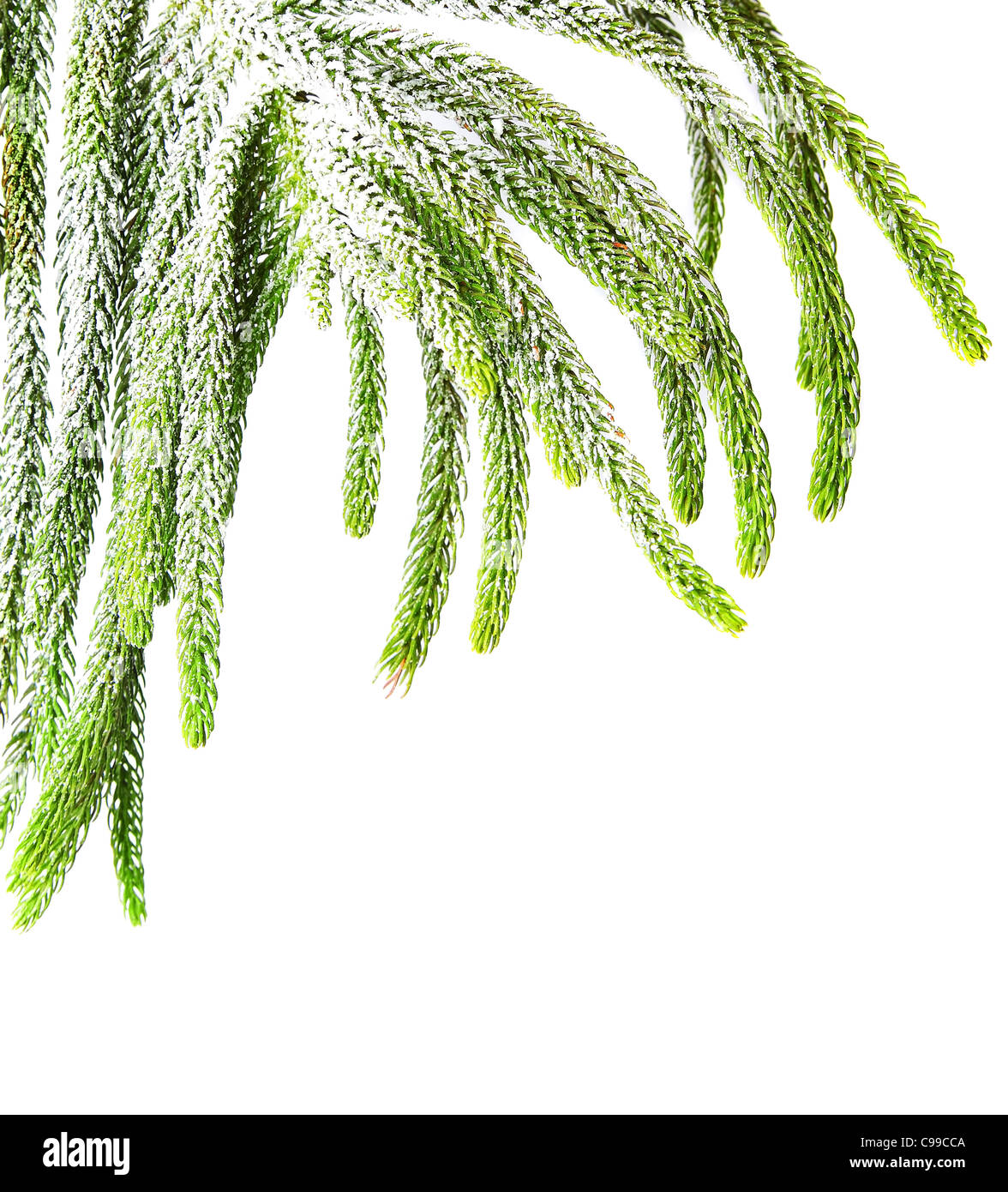 Beautiful green fir holiday border isolated on white background, Christmas tree branch - Stock Image