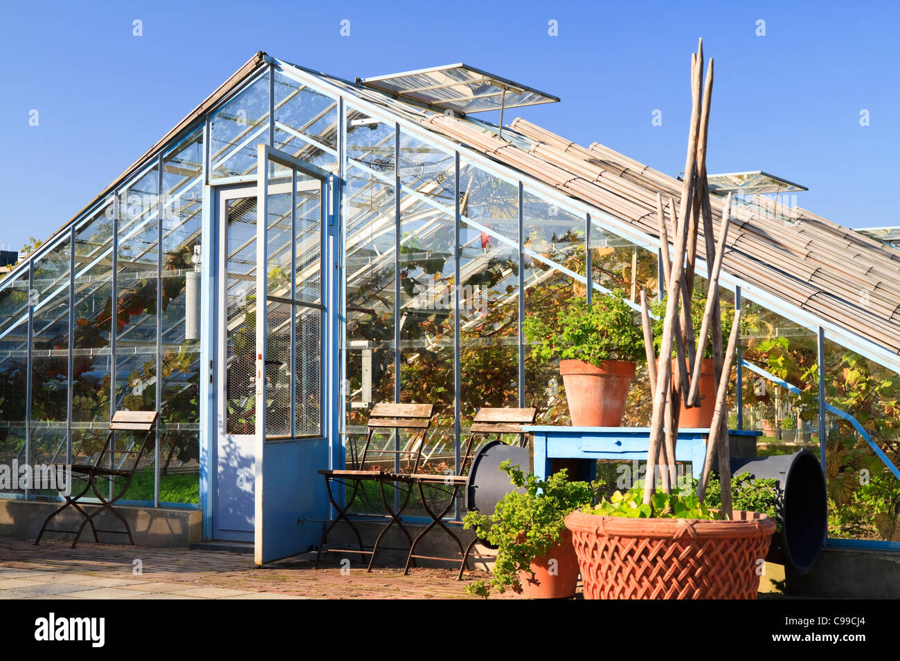 Old blue hot house used to cultivate vines on a sunny day in the autumn - Stock Image