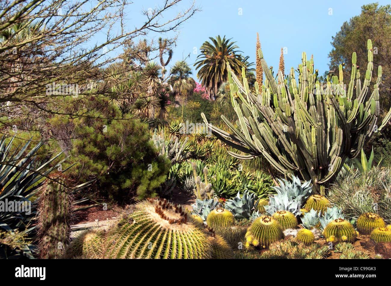 Globe Cactus Stock Photos & Globe Cactus Stock Images - Alamy