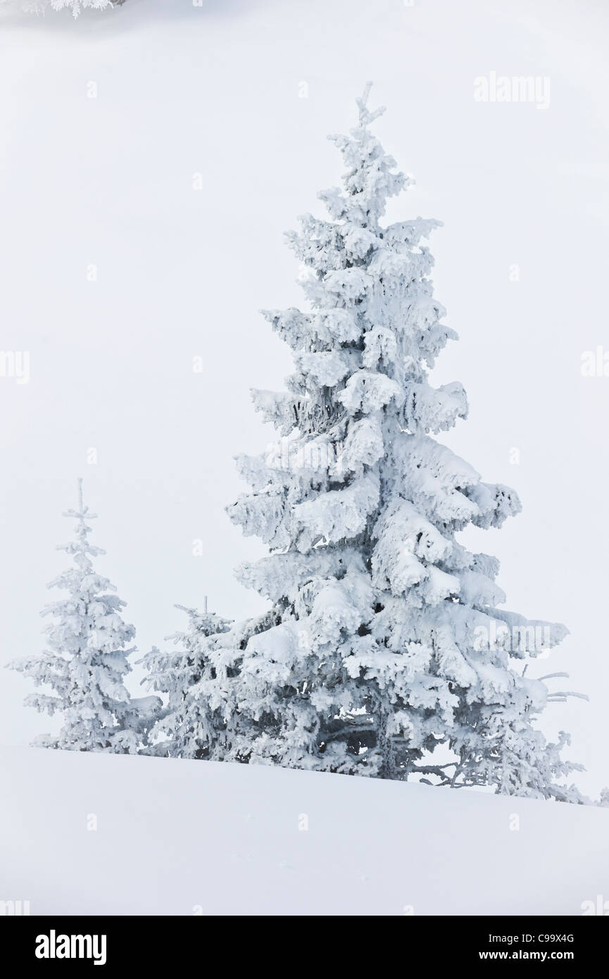 Germany, Bavaria, View of snowcovered Herzogstand mountainforest - Stock Image