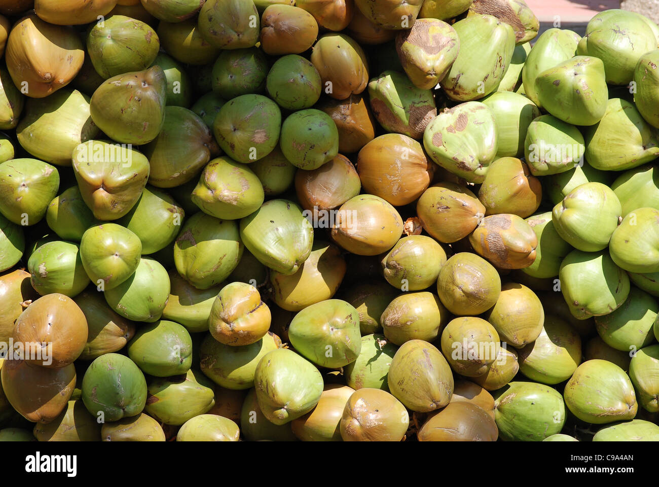 coconuts for selling, india Stock Photo