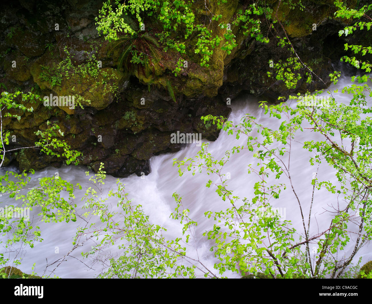 Whitewater on Rogue River with new spring growth, Oregon - Stock Image