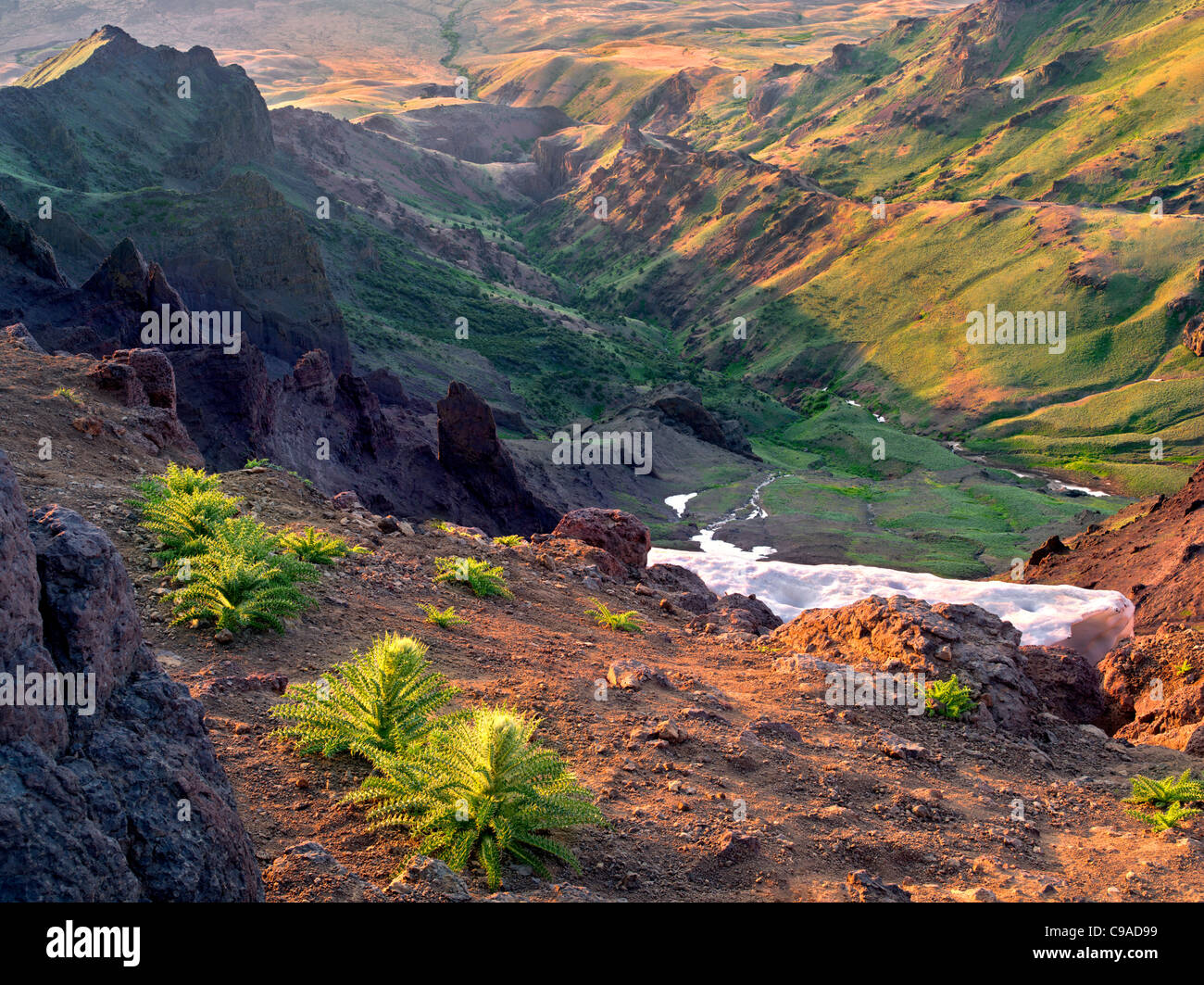 East Rim Overlook with thistles. Steens Mountain Wilderness, Oregon - Stock Image