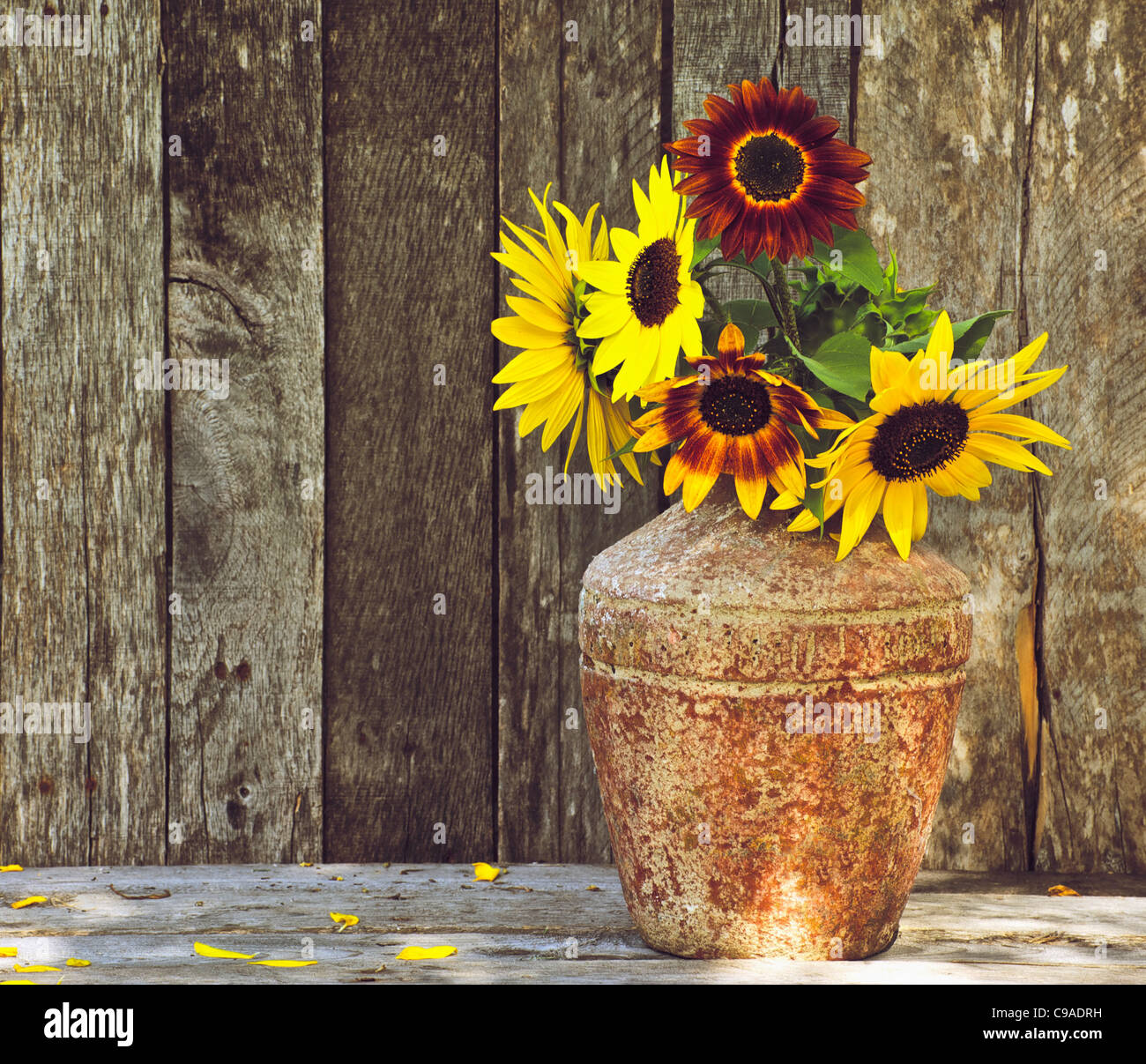 Richly Toned Image Of A Rustic Vase With Beautiful Sunflowers On Grunge Wood Background Copy Space