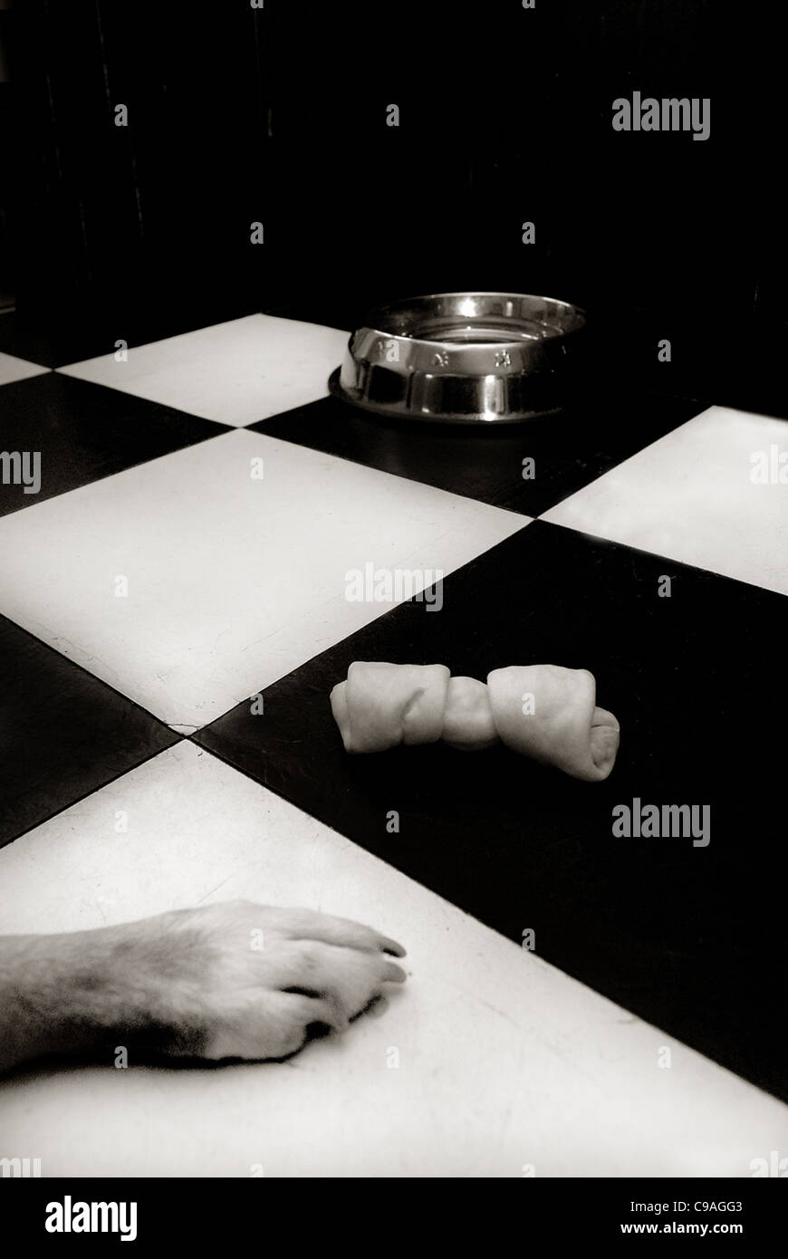 Dog bowl and chewy bone with dog paw on black and white chequered floor - Stock Image