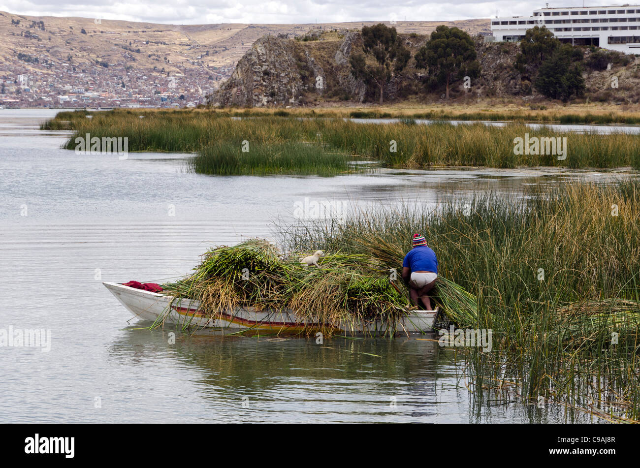 Man collecting reeds on a boat nearby Uros island floating islands Puno Peru - Stock Image