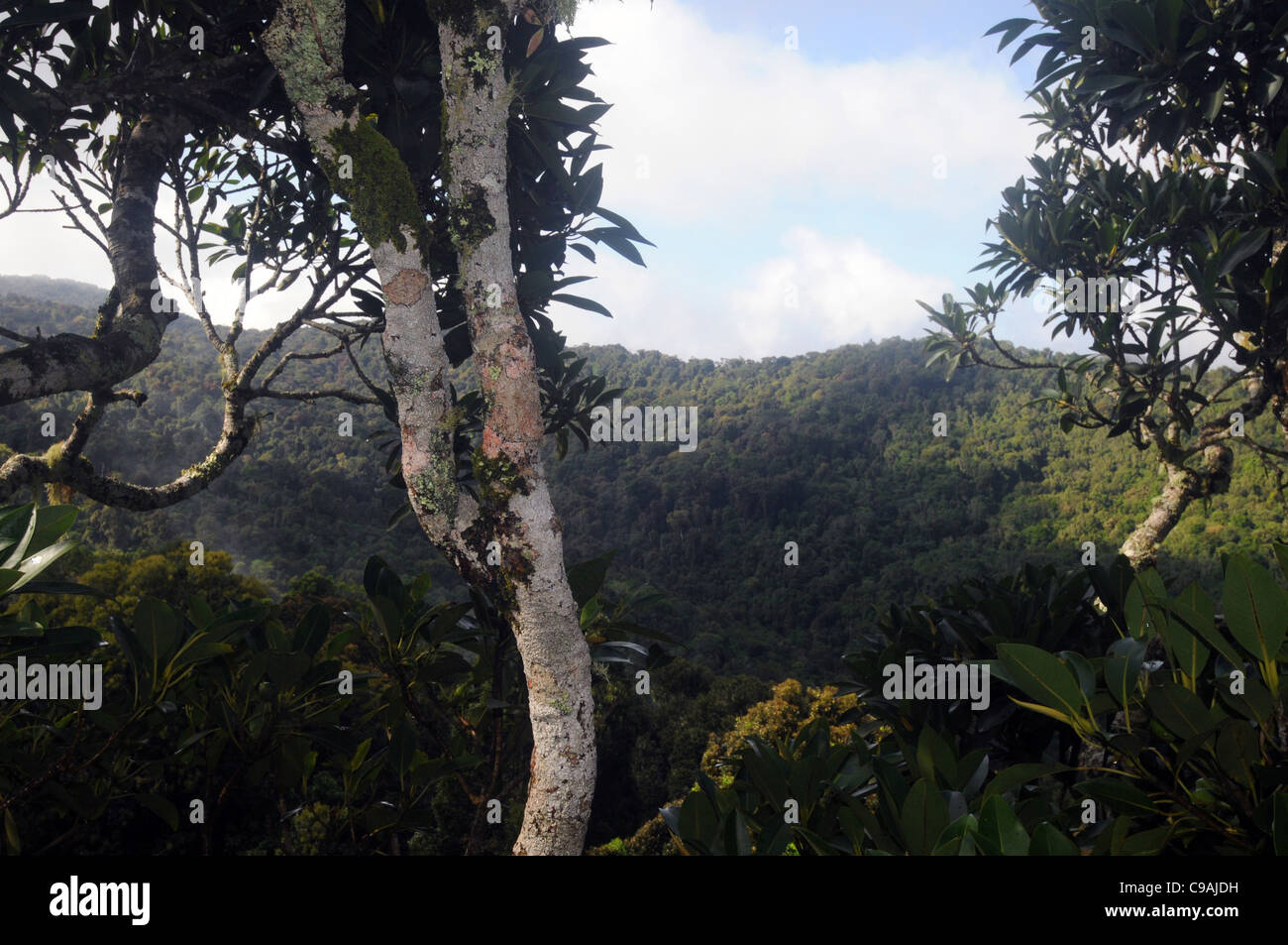 Oreillys Stock Photos & Oreillys Stock Images - Alamy