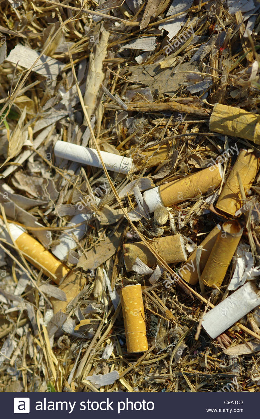 CIGARETTE BUTS BUTTS thrown away pile of dirty rubbish cigarettes ends end discarded trash smoking behavior behaviour - Stock Image