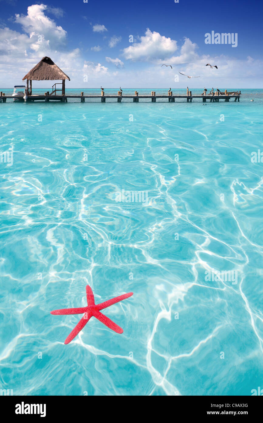 Starfish as summer vacation symbol in tropical beach with turquoise water - Stock Image