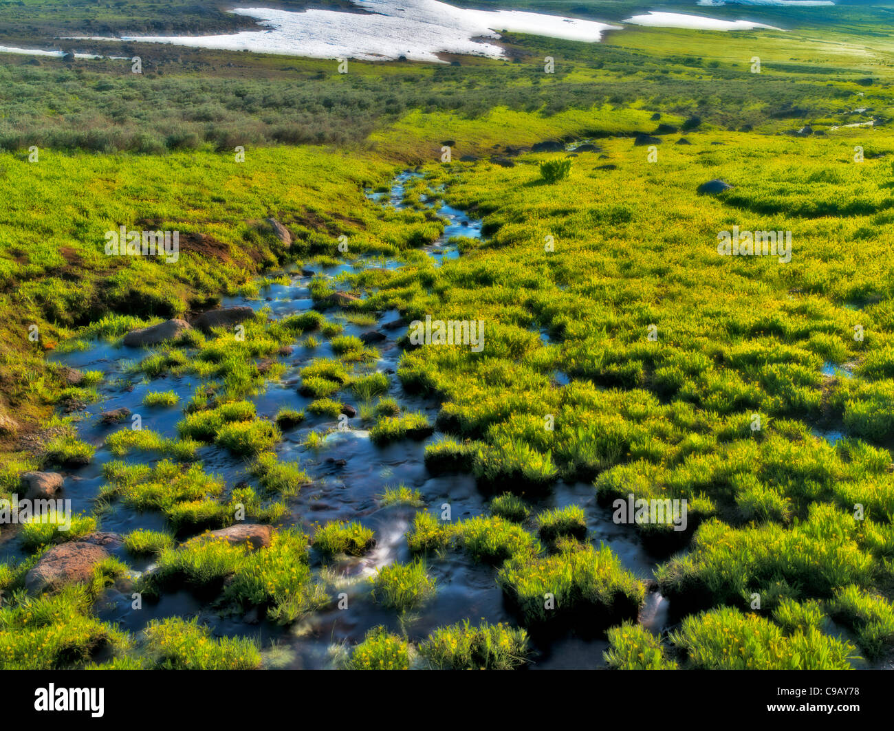 Field of buttercups and seasonal unnamed stream. Steens Mountain Wilderness - Stock Image