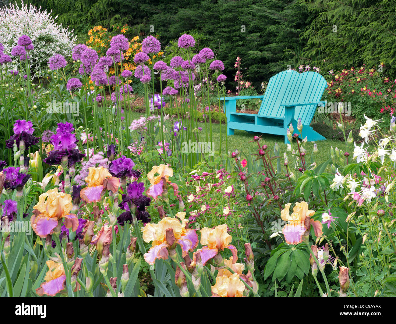 Iris and other flowering plants with chair at Schriners Iris Garden. Oregon - Stock Image