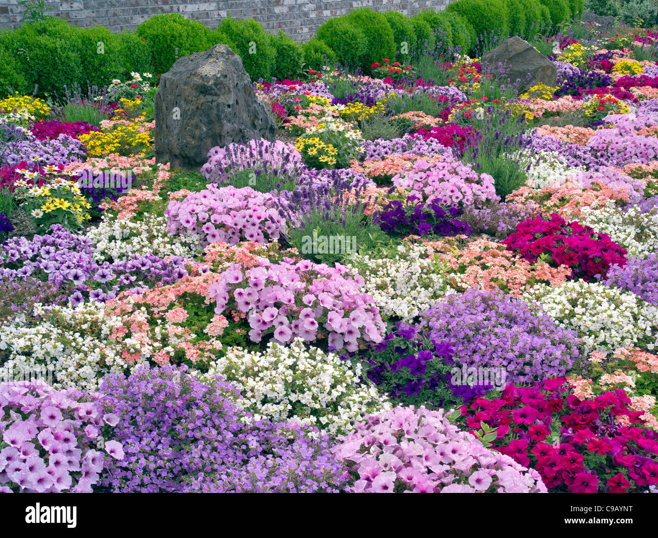 Mixed flowers in landscaping at Al's Nursery, Oregon - Stock Image