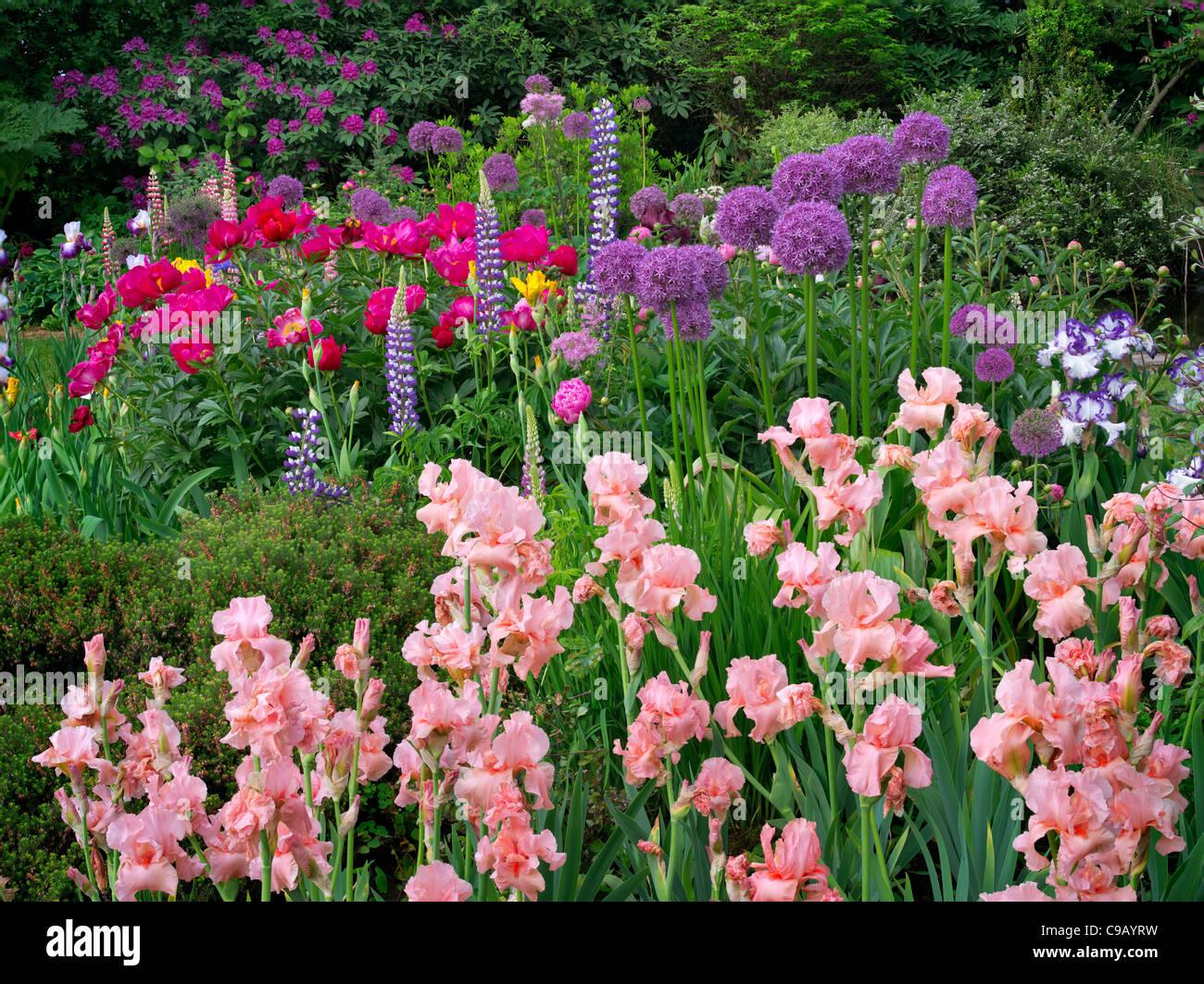 Iris and other flowers at Schreiner's iris Gardens. Brooks, Oregon - Stock Image