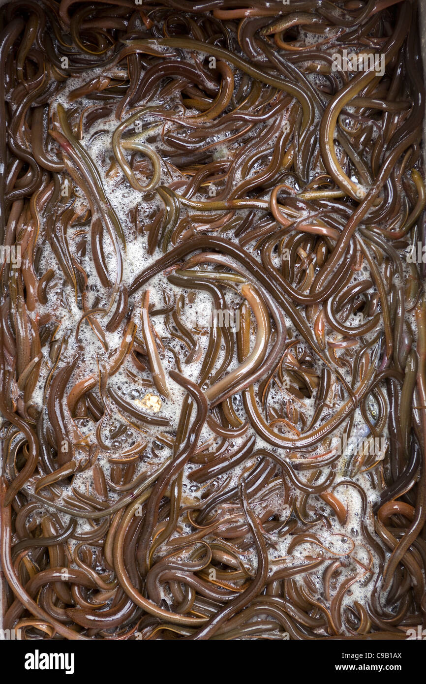 Live Raw Worms on sale in Market Hanoi - Stock Image