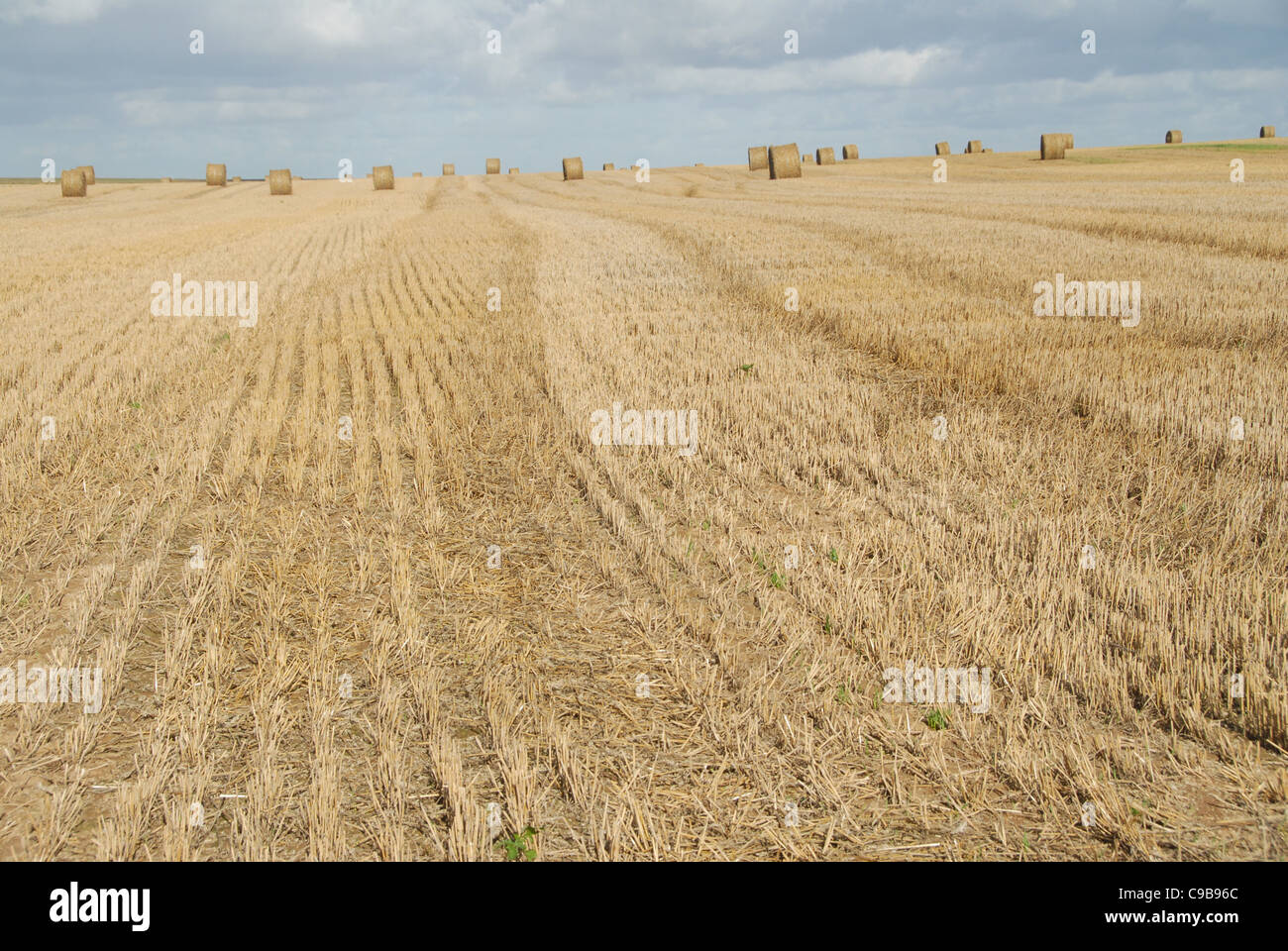 Wheat balls on a corn field after autumn harvest in Picardy, northern France - Stock Image