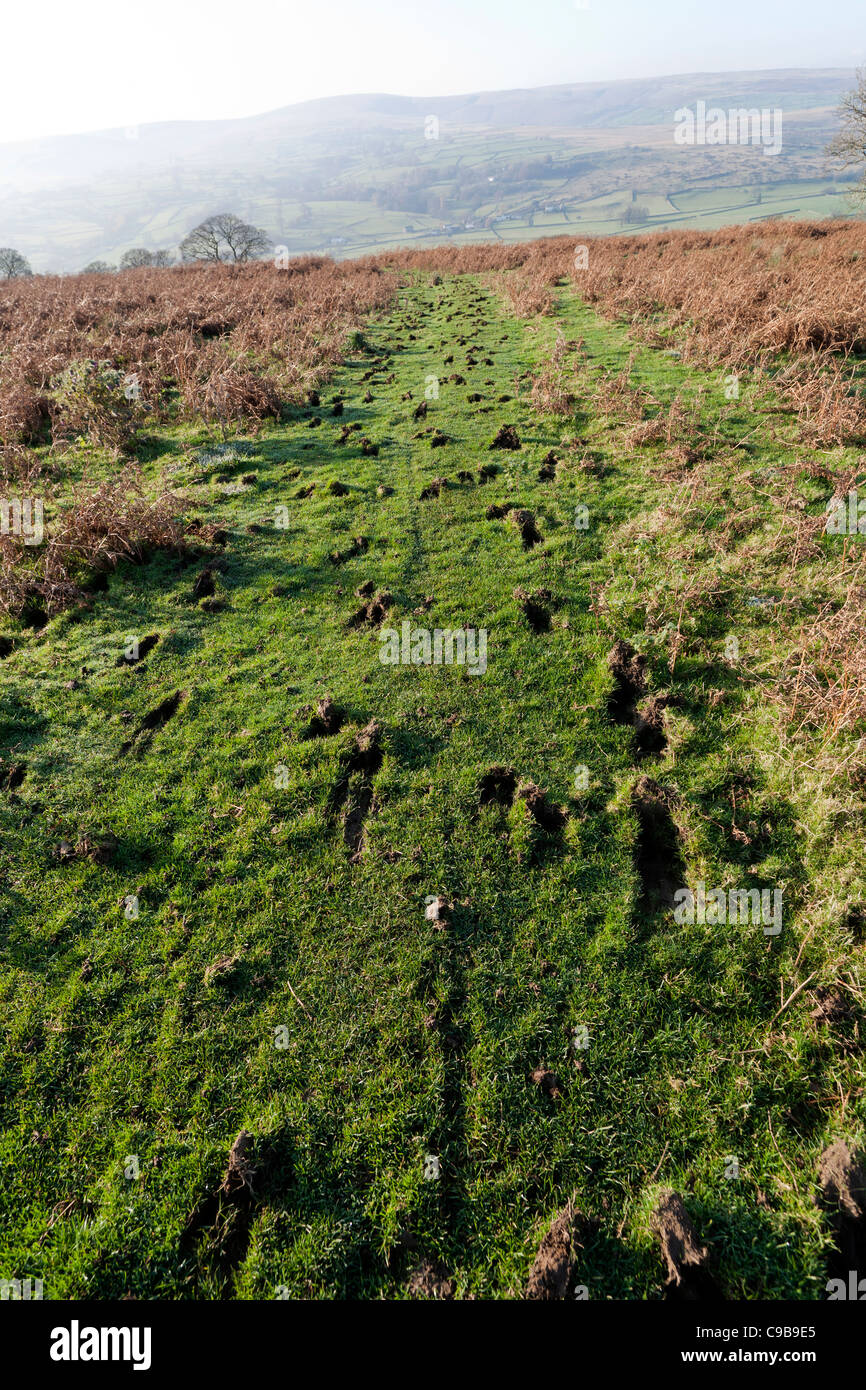 A grassy  footpath heavily scarred by hooves exposing mud clumps going off into the distance with Lakeland fells - Stock Image