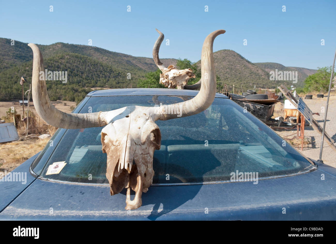 Skulls are among the menagerie of items for sale at Joe Bob's junk shop along route 70 in Southern New Mexico. - Stock Image