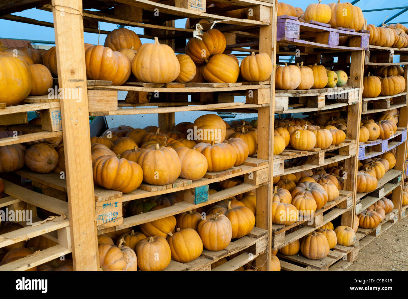 Pumpkins in a farm barn - Stock Image