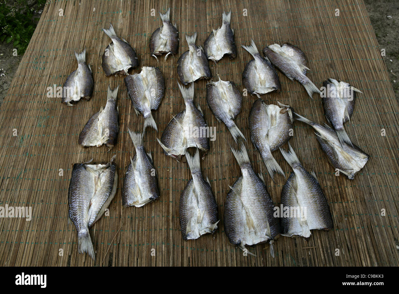 Africa, Guinea-Bissau, Fresh fishes kept on mat - Stock Image