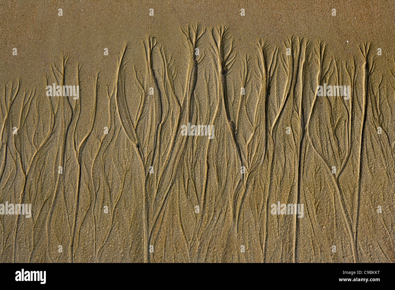 Africa, Guinea-Bissau, Tide marks on the beach - Stock Image