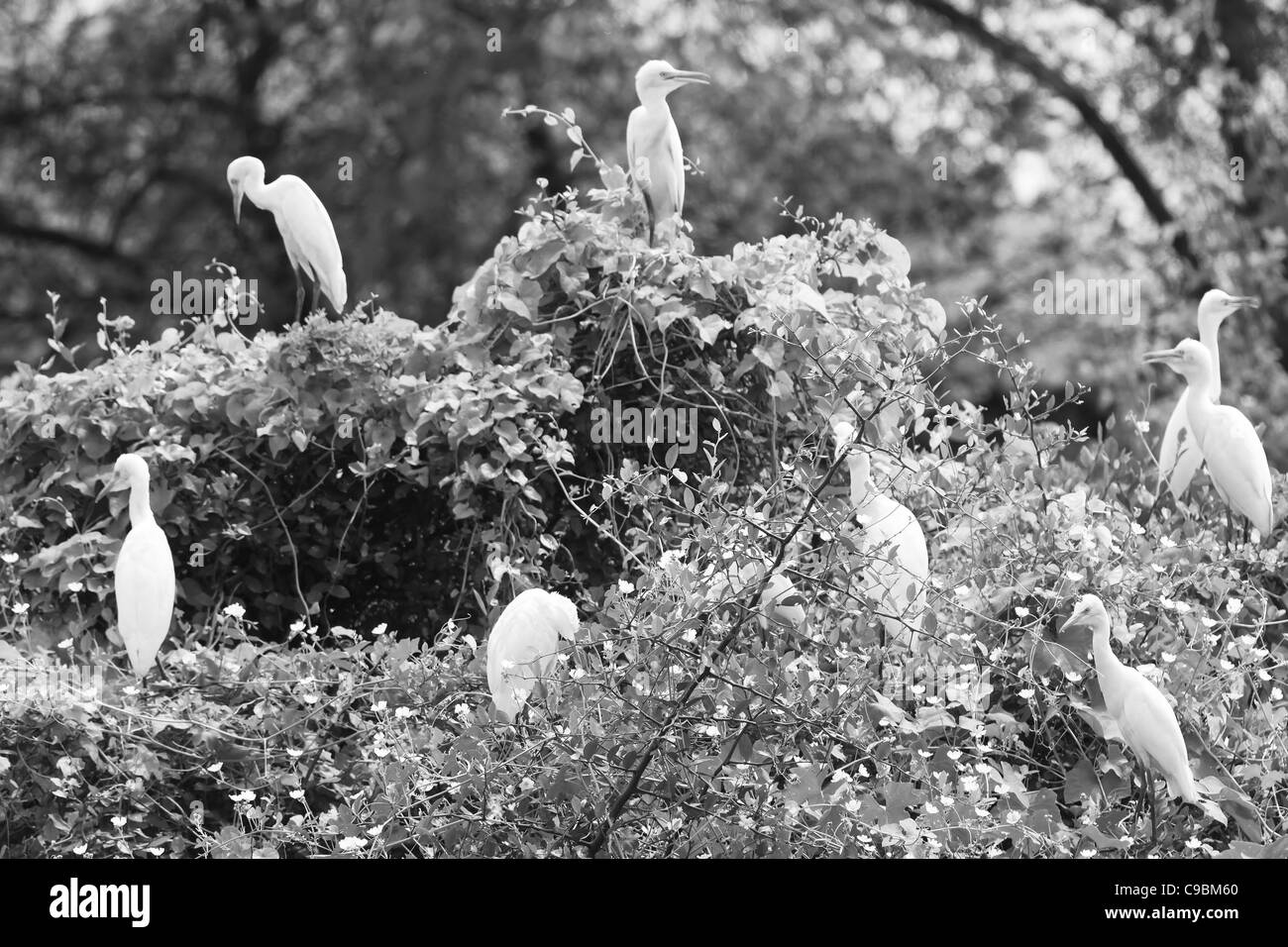 Birds Nature Egrets Wetland Bird Sanctuary Wildlife - Stock Image