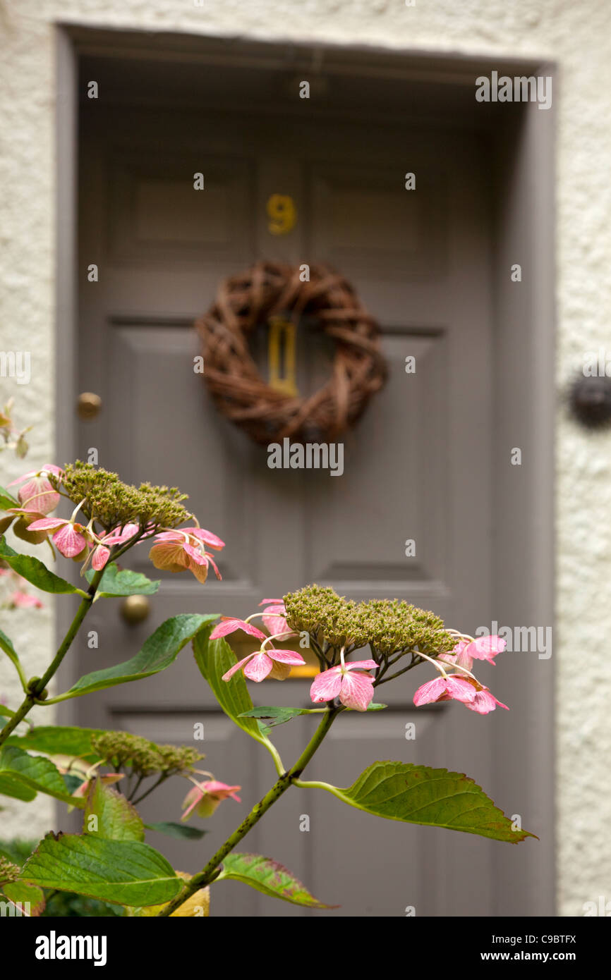 Front door of english cottage with hanging wicker wreath and close-up of hydrangea plant, england Stock Photo