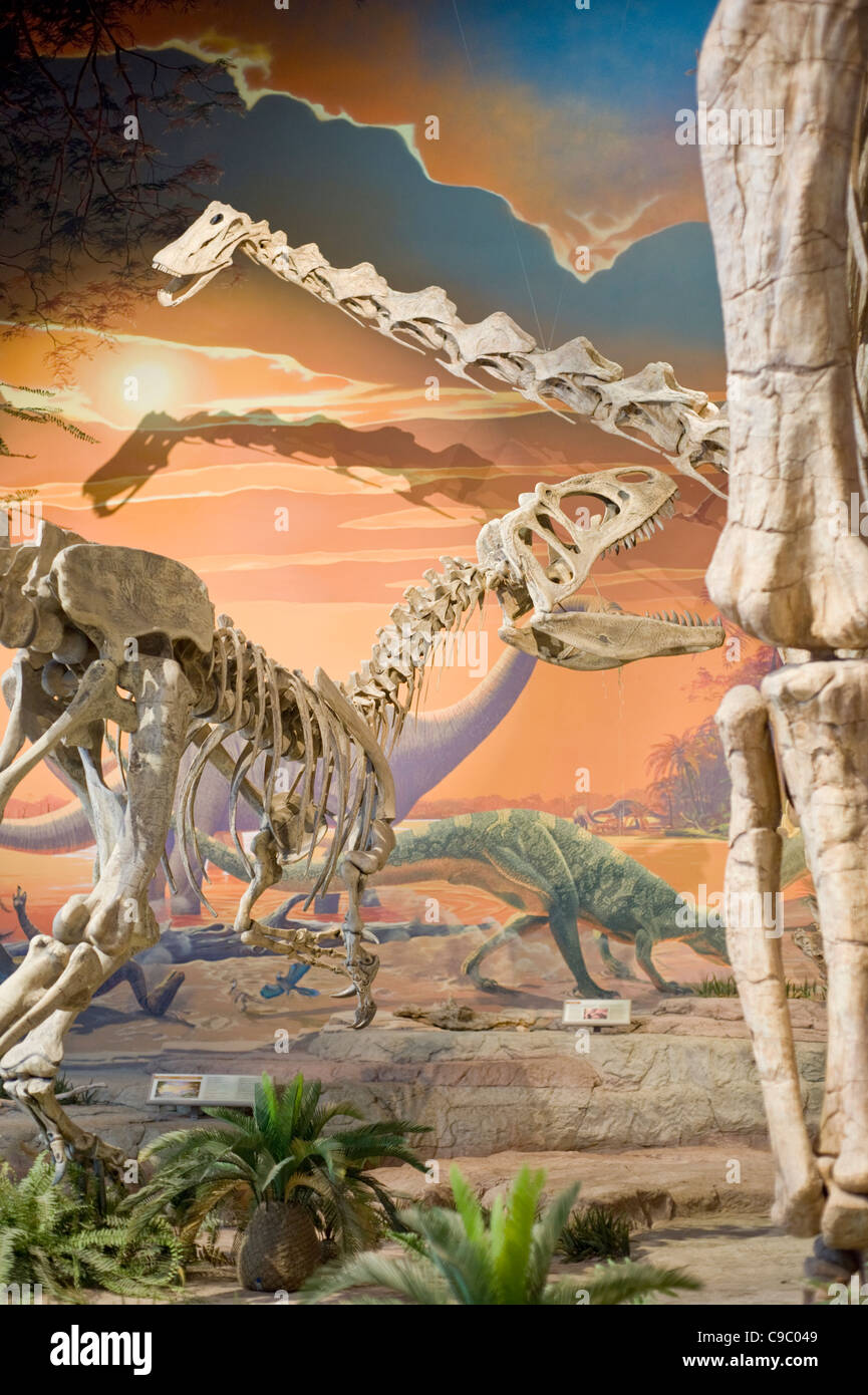 Dinosaur exhibit at the New Mexico Museum of Natural History and Science, Albuquerque, New Mexico. - Stock Image