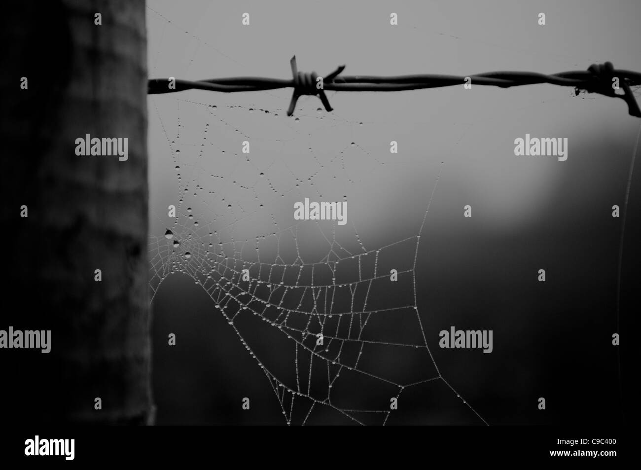 Spider web on a barb wire fence - Stock Image