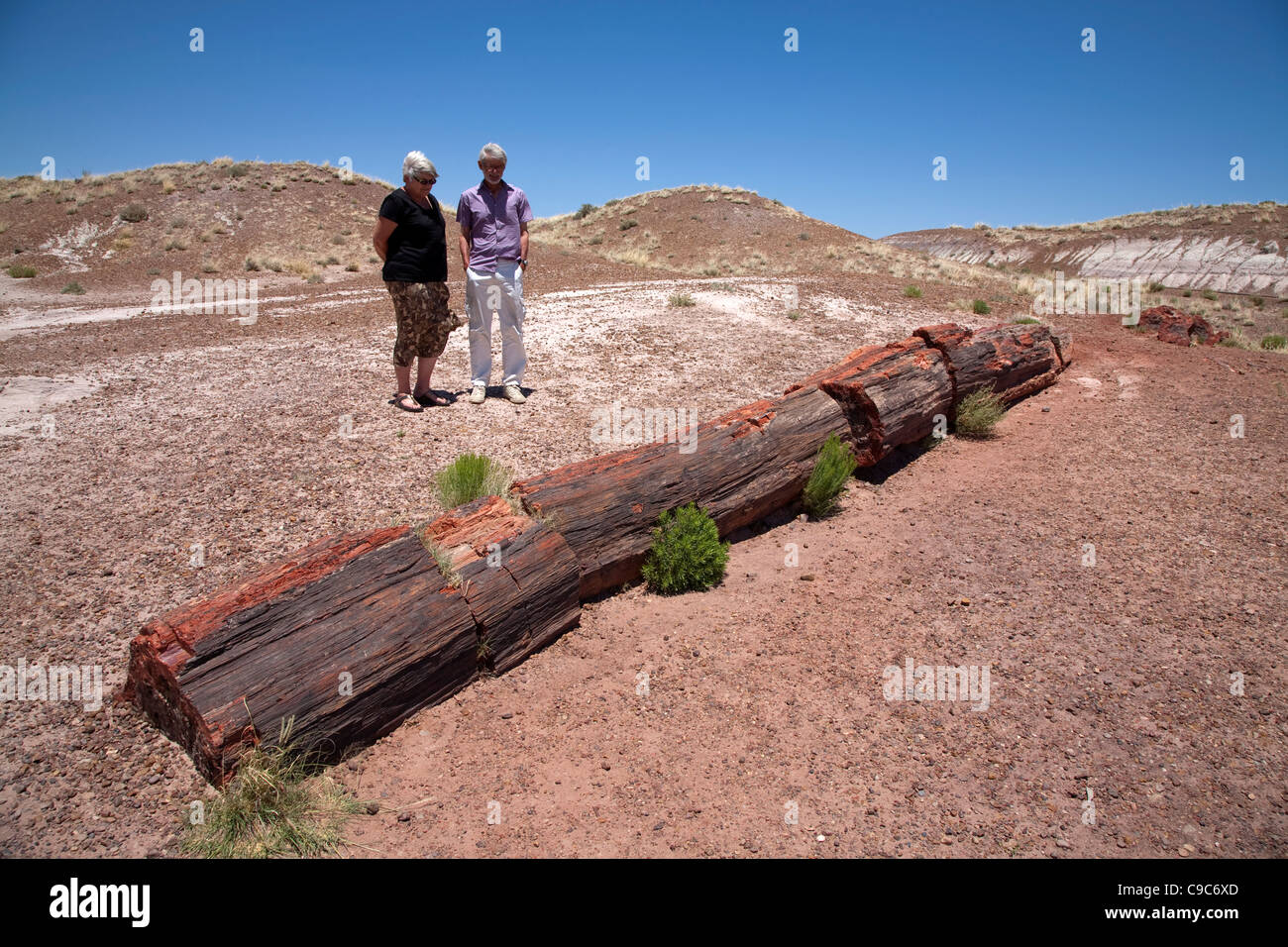 tourists looking at a fossilized tree trunk in Petrified Forest National Park in Arizona USA on a sunny summer day - Stock Image
