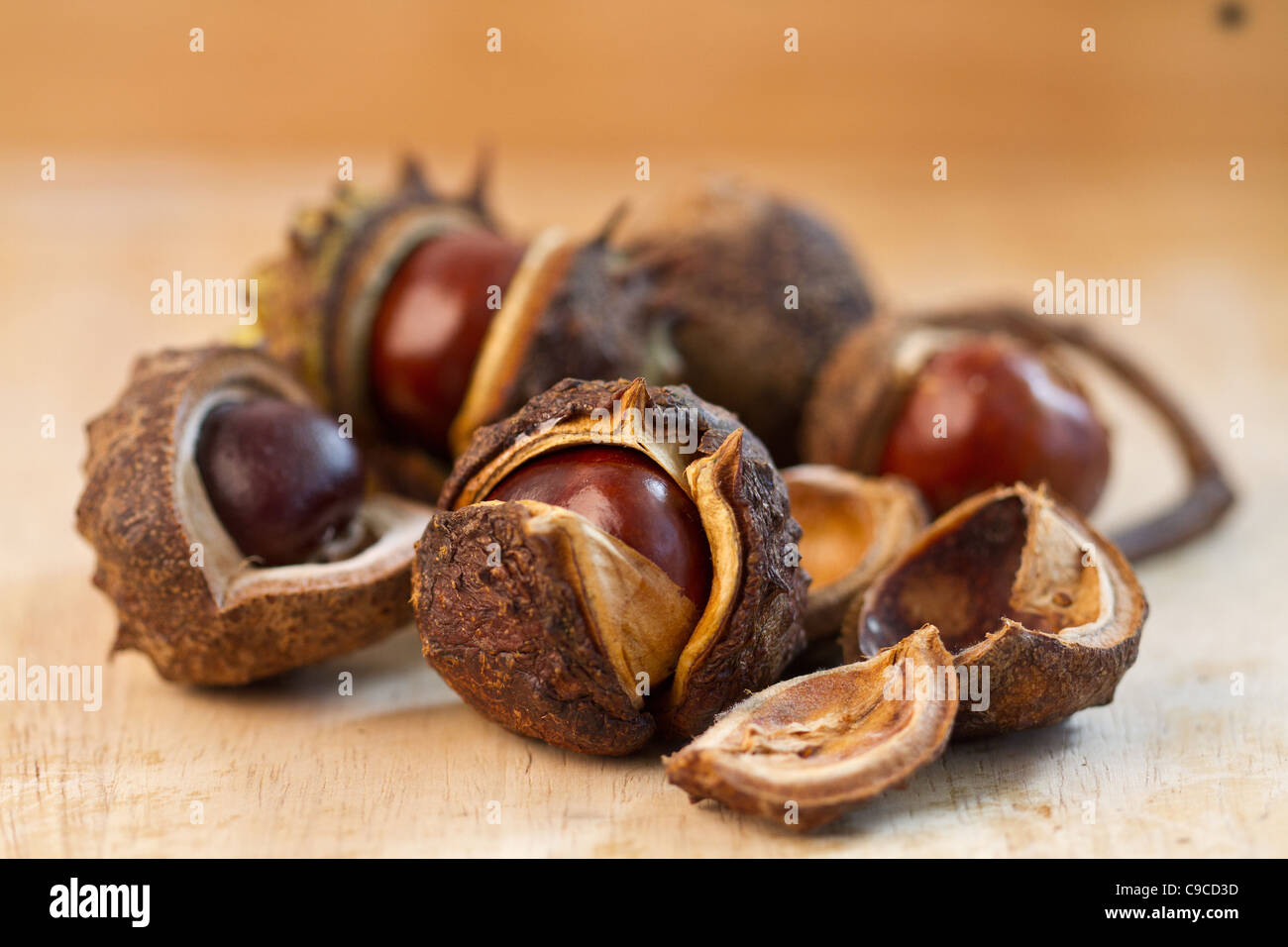 A group of Conkers - Stock Image