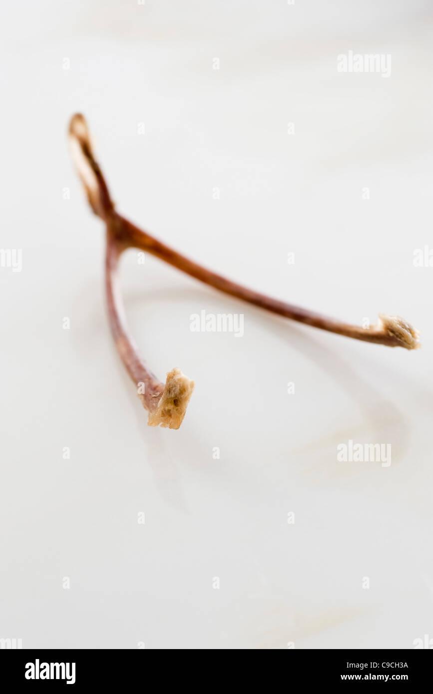Wishbone - Stock Image