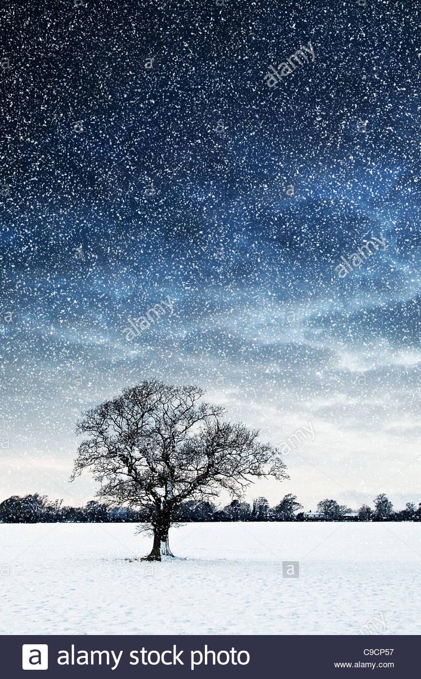 tree in field snowing - Stock Image