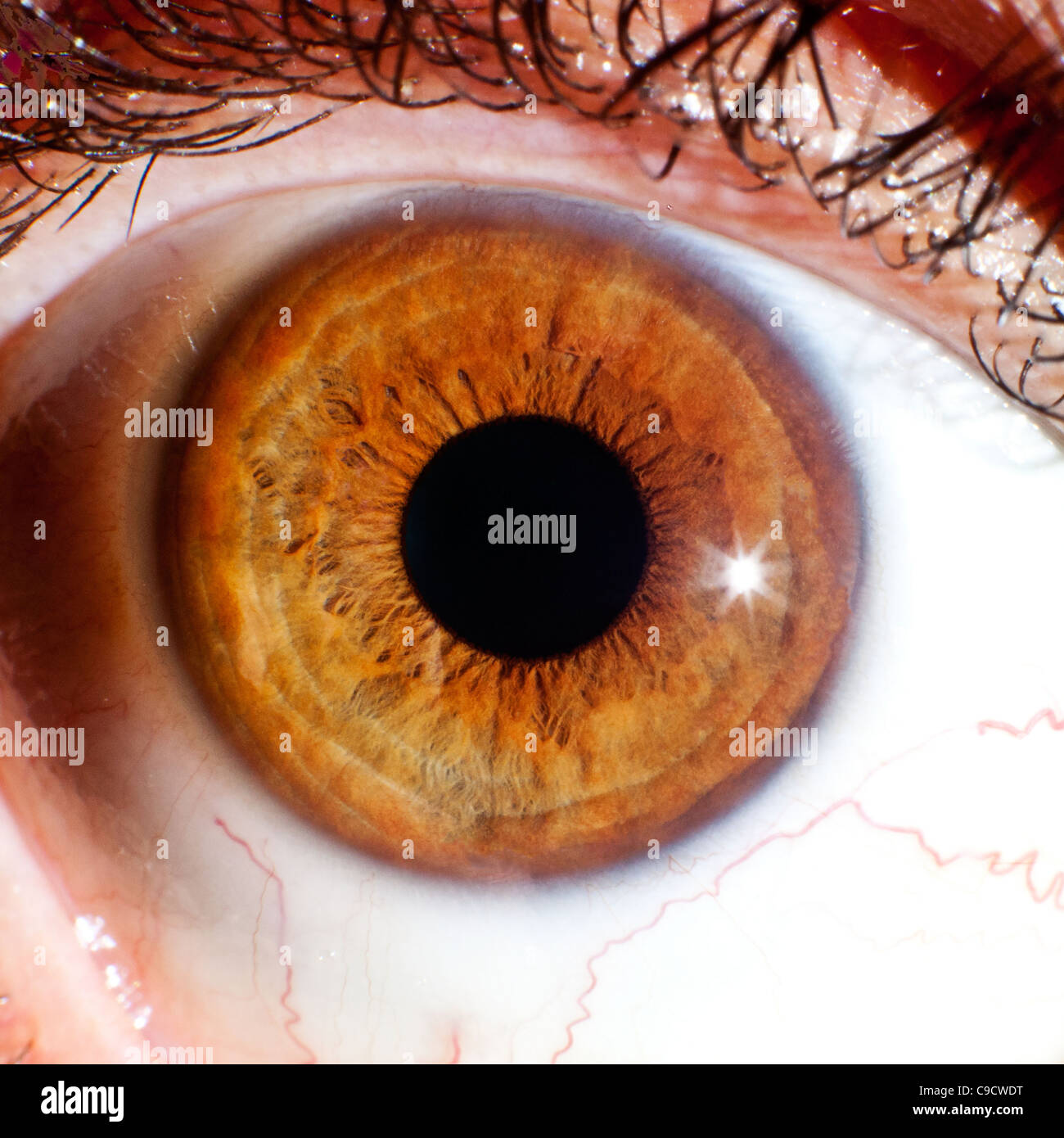 close up macro of eye ball iris and pupil - Stock Image