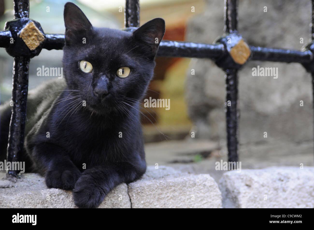 Black cat in Istanbul, Turkey - Stock Image