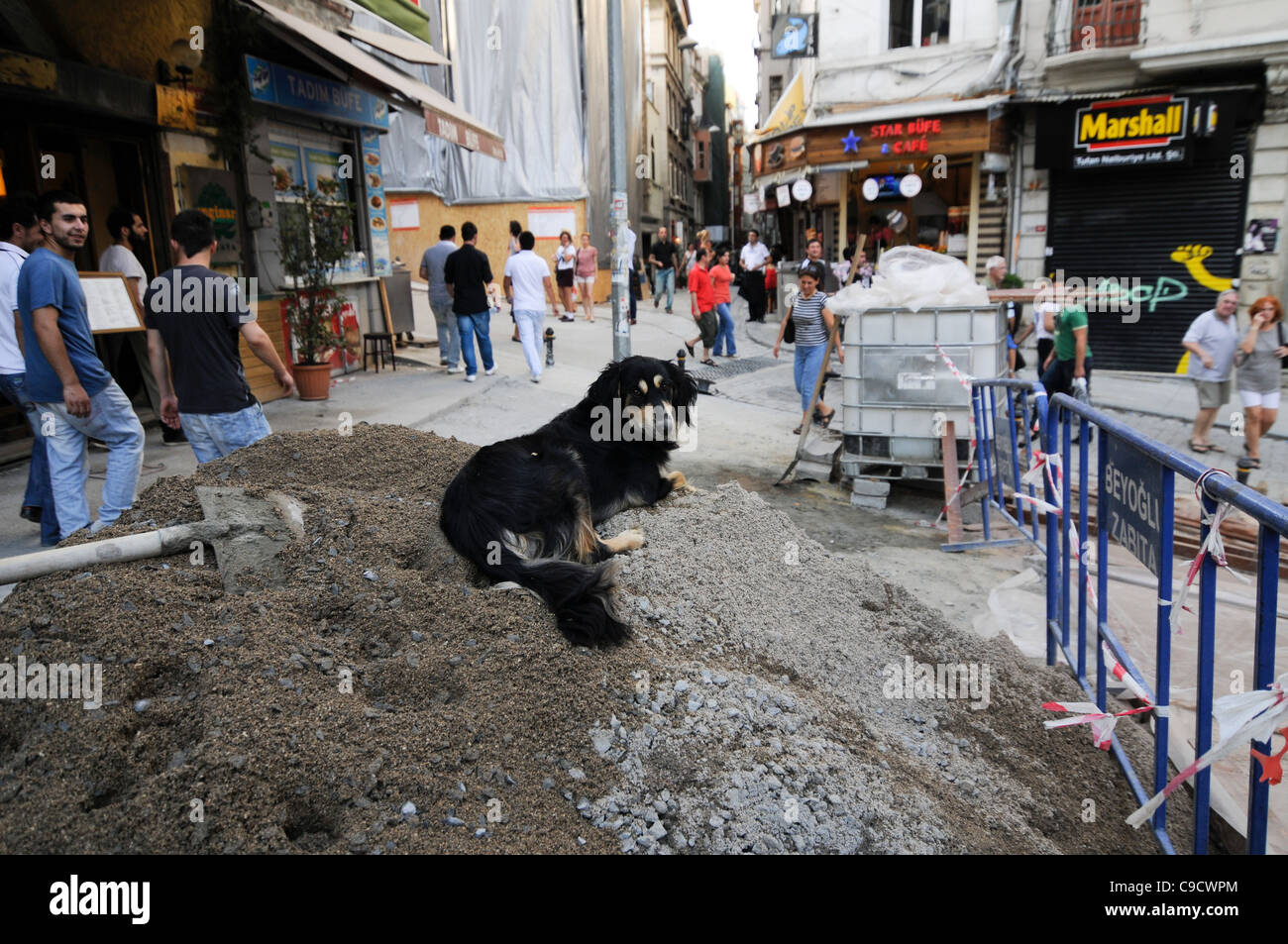 A mongrel dog resting in a pile of cement, in a construction zone in Beyoglu district, Istanbul, Turkey. - Stock Image