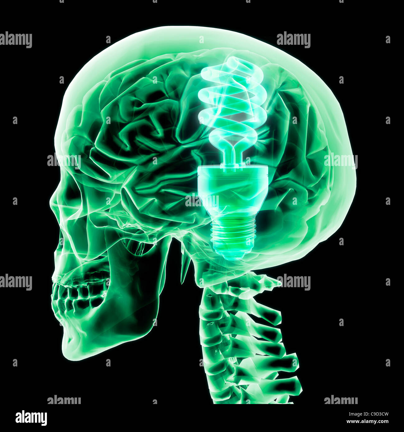 Brain with green light bulb II, Digitally Generated Image by Hank Grebe - Stock Image