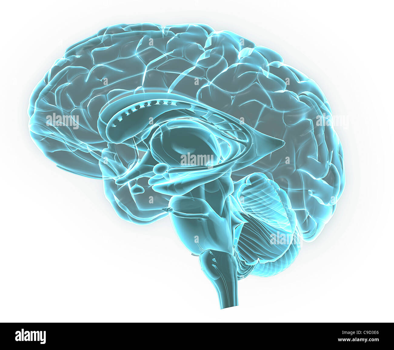 Blue X-ray image of human brain anatomy, 3-D sagittal section (side ...