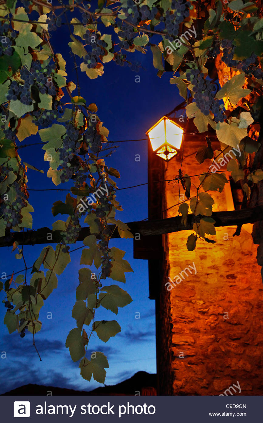 streetlight and vine - Stock Image