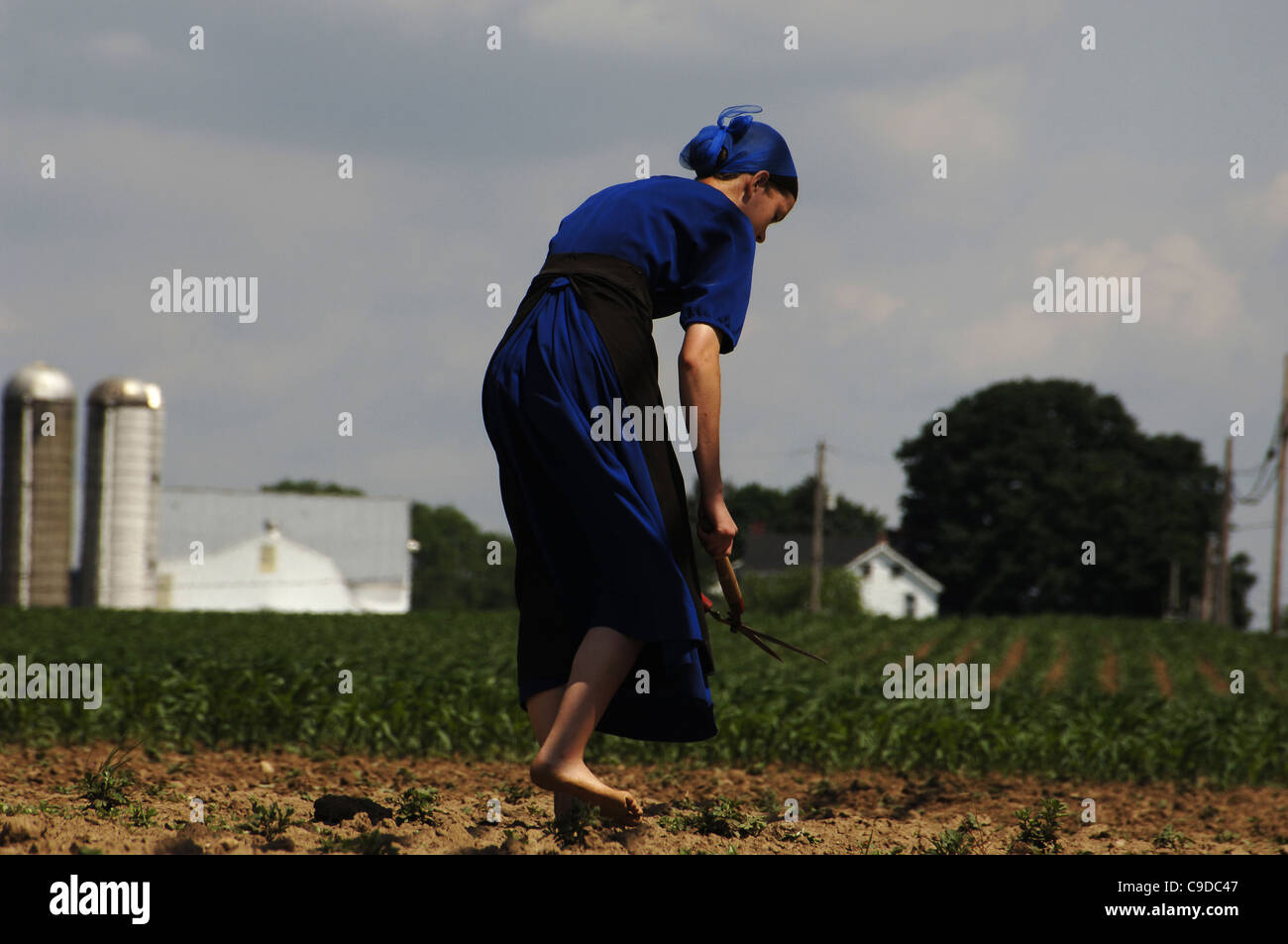 Amish woman doing farm works. Lancaster County. United States. - Stock Image