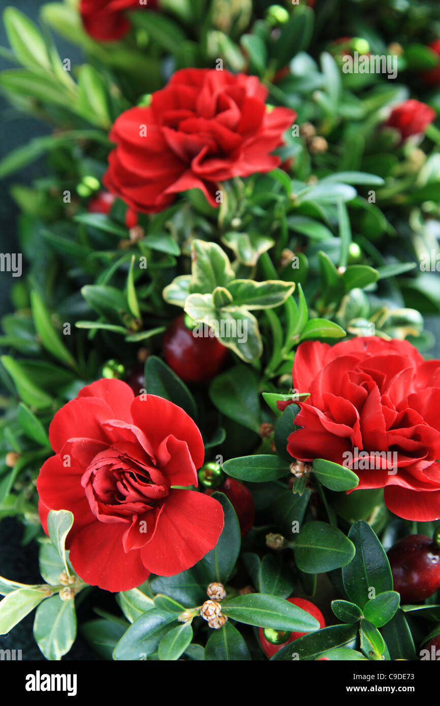 vertical closeup image of a carnation, cranberry, and boxwood Christmas arrangement - Stock Image