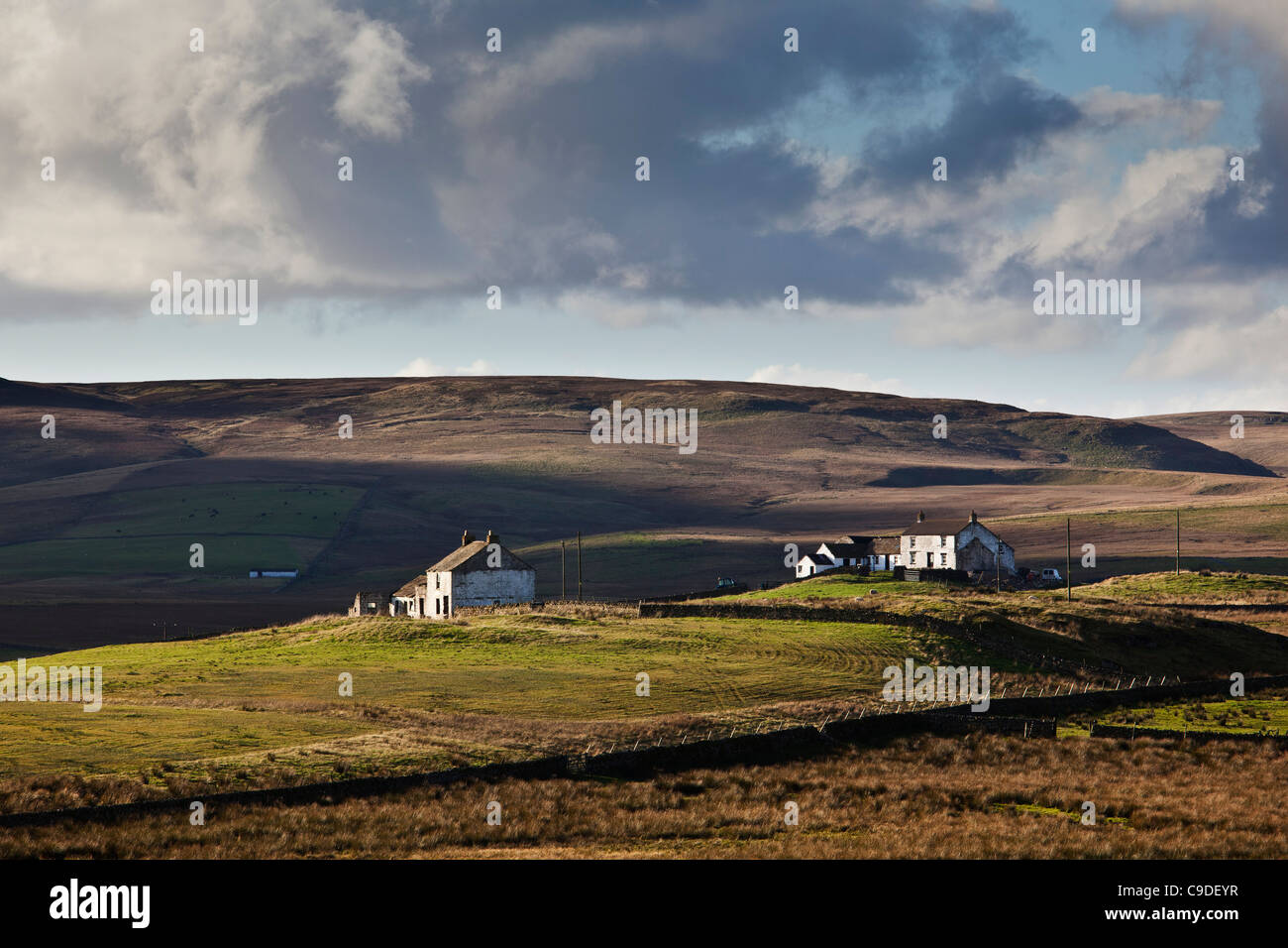 Remote farmhouses, Forest in Teedale, County Durham - Stock Image
