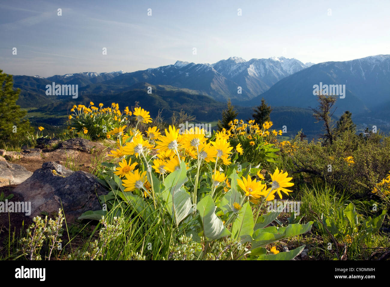 WASHINGTON - Overlooking the Wenatchee River Valley from the balsamroot covered summit of Sauer Mountain near Peshastin. Stock Photo