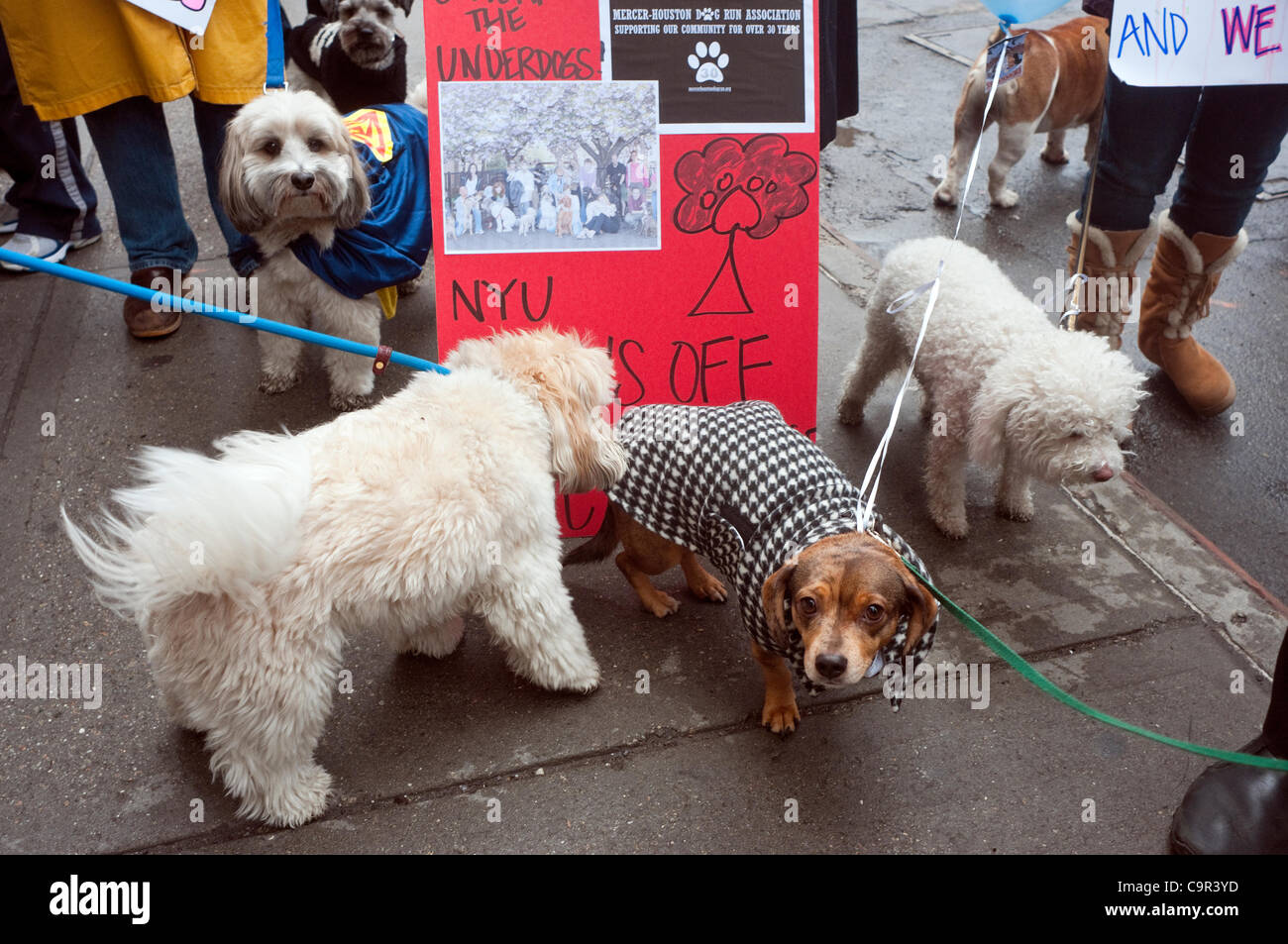 New York, NY -  11 February 2012 Dogs dressed as Under Dog, accompanied by their guardians ,march from the Mercer - Stock Image