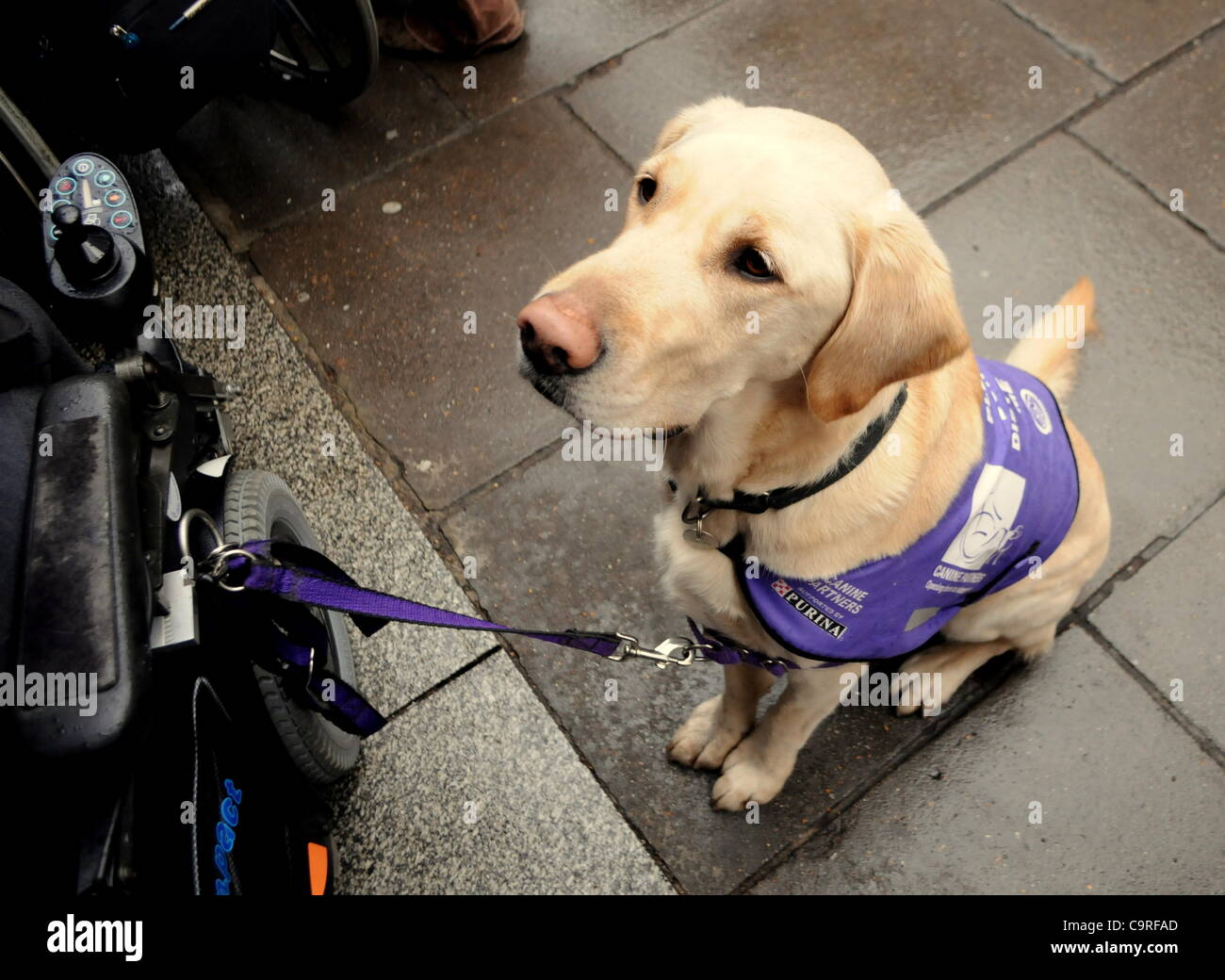 London Uk 13 02 12 A Labrador Assistance Dog Wears An Anti Cuts