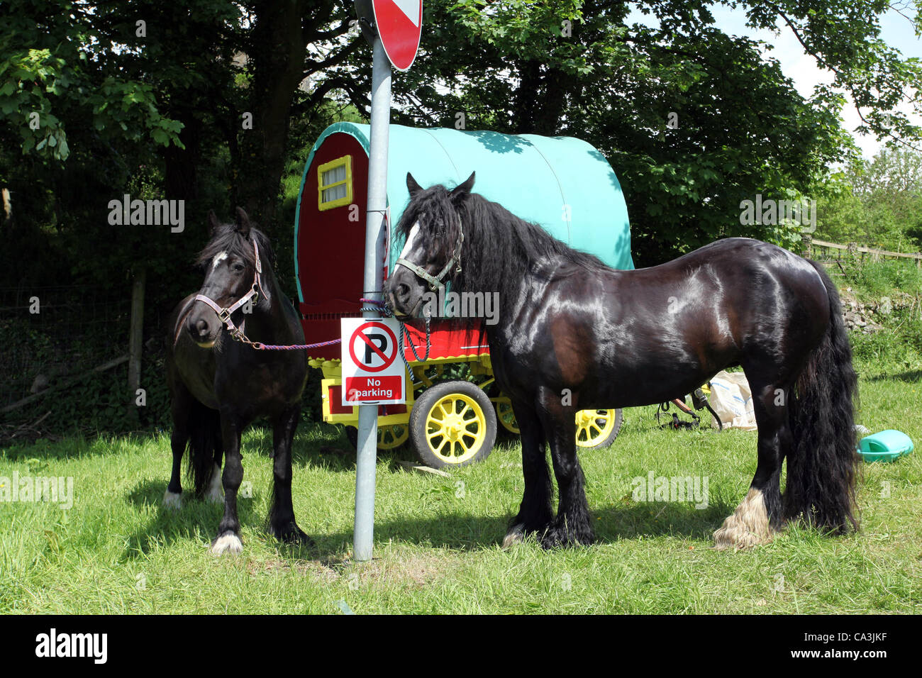 "Vardo Caravan Traditional horse-drawn Gypsy caravans or ""Bow Top"" canvas covered Wagons en-route to the annual gathering - Stock Image"