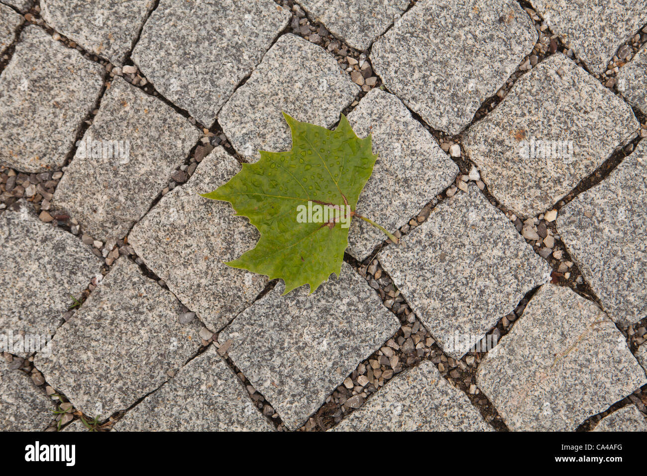 sheet rock sidewalk fall loneliness green rate - Stock Image