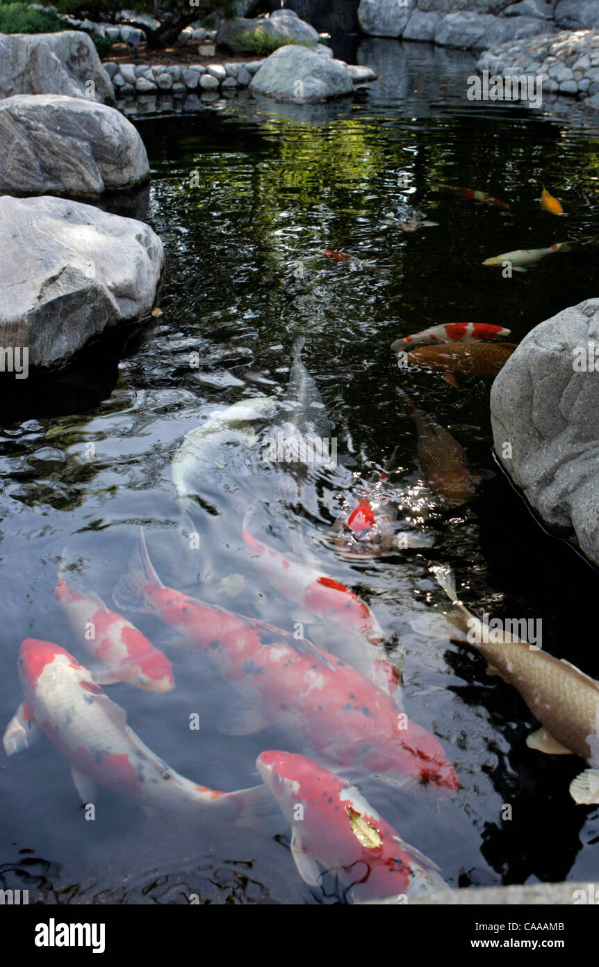 A koi pond is inside the exising Japanese Friendship Garden in Balboa Park. Friday, Oct. 7, 2005, the huge hillside Stock Photo