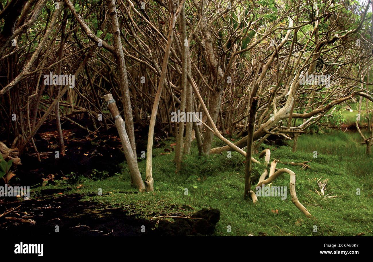 Jul 03, 2010 - Big Island, Hawaii, U.S. - Tree limbs drape along the peaceful waters streaming off of the warm ponds - Stock Image