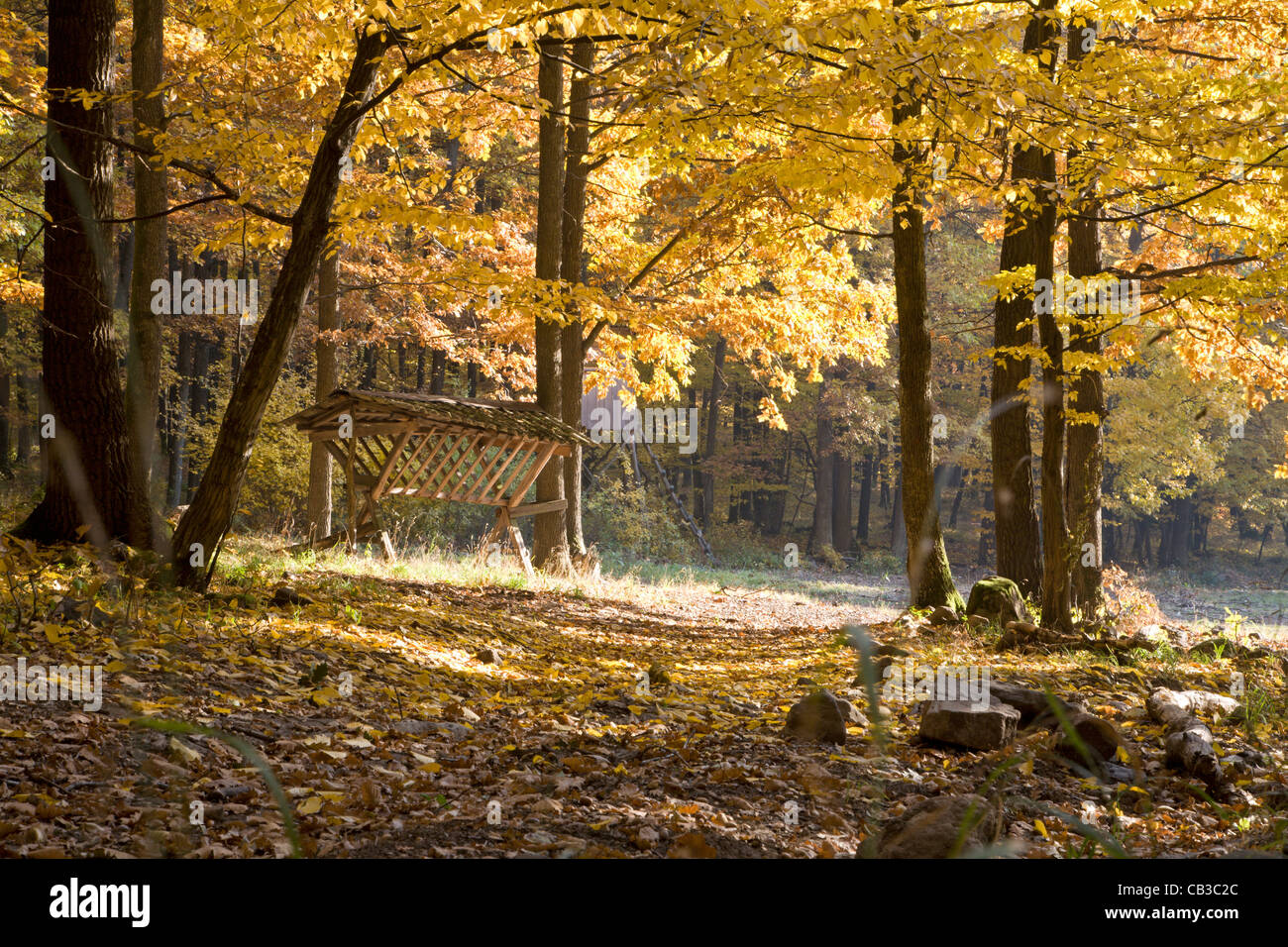 crib in autumn forest - Stock Image