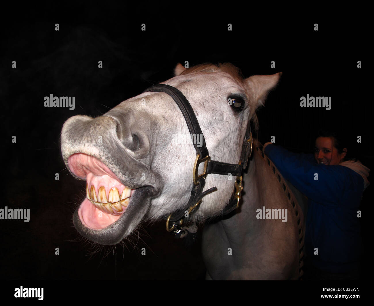 Funny Horse Face Stock Photos & Funny Horse Face Stock ... - photo#29